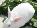 兔子养殖市场前景广泛