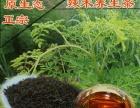 云南辣木养生保健茶,辣木茶 红茶,原生态辣木叶茶