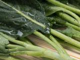 厂家批发云南特产新鲜芥兰蔬菜无农药天然绿色芥蓝四季蔬菜直供