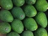 秘鲁牛油果批发 新鲜水果鳄梨色拉牛油果榨汁寿司餐饮一手货源