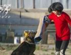 新疆天狼犬业训练繁殖基地 宠物寄养 训练