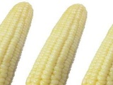 速冻白玉米 速冻粘玉米 速冻糯玉米-大批现货,低价出售