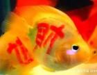 鱼缸清洗维护租摆维修鱼缸搬家鱼缸定做一条龙服务