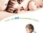 今天下单包邮 宠物小猫咪异短加菲猫活体幼猫纯种加