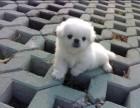 惠州哪有串串犬卖 惠州串串犬价格 惠州串串犬多少钱