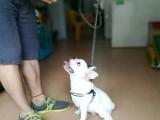 训犬师分享训狗经验,轻松解决狗狗不良习惯