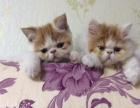 自家产的小猫、800---3000.啥样的都有。