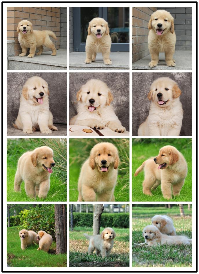 南京本地狗场转行现所有犬种低价处理