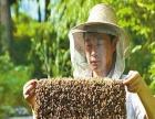 三九追蜂正蜂蜜 三九追蜂正蜂蜜诚邀加盟