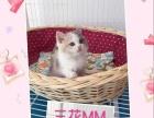 高品质蓝白、蓝猫、三花MM火爆销售…