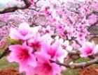 古田桃林赏花 鸳鸯溪一日游 福州周边旅游攻略