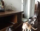 宁波北仑三只小猫送养