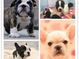 暮光出品 實屬佳品 高品質幼犬承諾簽協議保障半年全國發貨