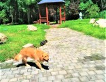 靜安西里家庭寵物寄養春節貓狗寄養單間散養暖氣可接送