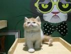 特价三天加菲猫数十只可选大包子脸水滴眼同城可猫上门