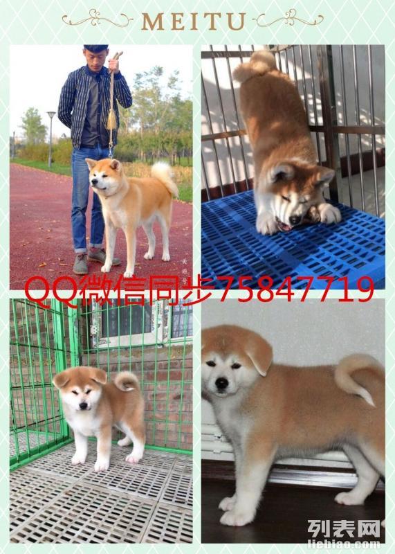 北京本地狗场直销各类幼犬一只也是批发价包健康签协议送用品