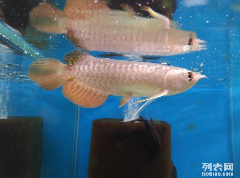 水族艺馆:鱼缸水族箱观赏鱼促销中