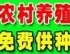 千华8号养殖加盟