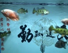 热带鱼 粗线 巴西亚 地图 等