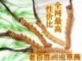 赤峰市2020年度元旦至春节回收冬虫夏草价格高