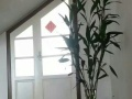 中日联谊医院附近 3室2厅2卫
