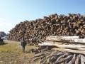 长期收杨柳木长期砍伐修剪树