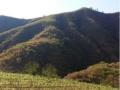 攀枝花市仁和区300亩林地转让