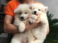 广州哪里有正规猫舍犬舍出售宠物