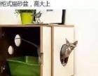 美今猫舍出售好品种宠物猫