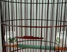 鸟笼出售,漂亮的鸟笼,低价卖给爱鸟人士