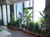 武汉光谷新发展国际中心绿植租摆新风格-组合造景