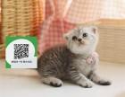 大连哪里开猫舍卖折耳猫 去哪里可以买得到纯种折耳猫