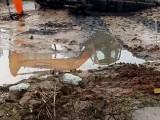 乌兰察布察右中旗市内水上挖掘机出租租赁