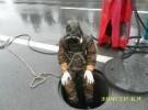湖州市专业疏通清洗市政企业工程污水管道堵气囊清淤