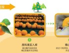 好柚牌蜂蜜柚子茶的功效作用有哪些