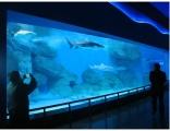 广东广州市海洋节生物展项目出租活动策划方案可行吗