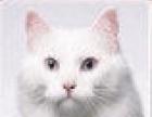 南昌灭鼠公司|南昌万禄专业灭鼠 鼠的密度调查