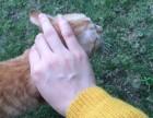 猫猫求领养免费