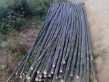 北京竹子哪里有賣竹片批發