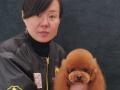 河南波比家宠物美容学校