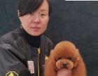 河南波比家宠物美容学校C6500
