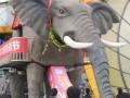 兰州机械大象出租租赁黄金狮出租金狮租赁