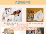 高品质巴哥犬签协议包健康 纯种 疫苗齐全有保障