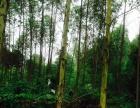 武宣黄茆 荒山 1000000平米