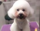 (十年老店)韩咪宠物美容