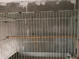 鸟笼60*40加厚镀锌铁质皮实带鸟巢刨花