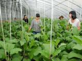 新型农业大棚-潍坊蔬菜温室大棚哪家好