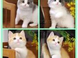 北京上門挑選可以送貓上門買活體