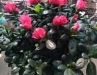 深圳光明精美花盆瓷盆出售
