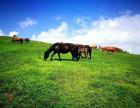 乌兰布统大草原,油画框里的美景